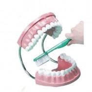 Diş Fırçalama Takımı