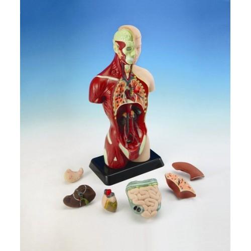 Küçük Boy İnsan Vücudu modelleri, Küçük Boy İnsan Vücudu fiyatı, anaokulu Fen ve Doğa Köşeleri fiyatları, anasınıfı Fen ve Doğa Köşeleri modelleri görselleri ve resimleri, anaokulu kreş malzemeleri
