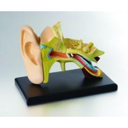 Kulak Maketi