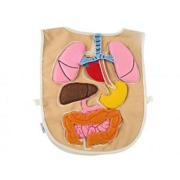 Organ Önlüğü SÖK-ÇIKAR